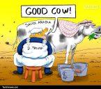 عربستان گاو شیرده