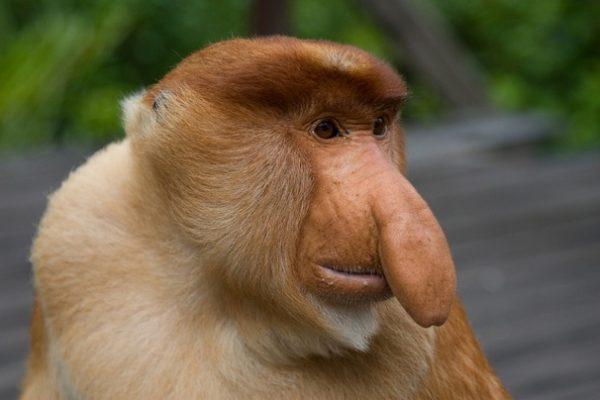 میمون انسان بوده؟